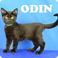 Adopt A Pet :: Odin - Carencro, LA