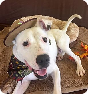 Terrier (Unknown Type, Medium) Mix Dog for adoption in Flint, Michigan - Stuart