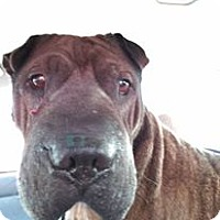 Adopt A Pet :: Mr. Bojangles in NC - pending - Mira Loma, CA