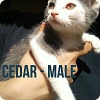 Adopt A Pet :: CEDAR - Glendale, AZ