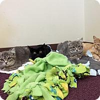Adopt A Pet :: Sascha,Tink,  Violet, Piper - Duncan, BC