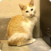 Adopt A Pet :: Veruca Salt - Sherman Oaks, CA