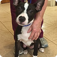 Adopt A Pet :: Cool Hand Luke - PLAINFIELD, IN
