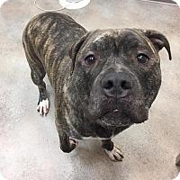 Adopt A Pet :: Walter - Cherry Hill, NJ