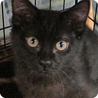 Adopt A Pet :: HuckleBerry - Buhl, ID