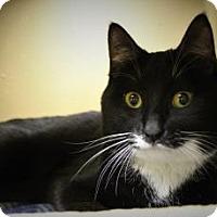 Adopt A Pet :: Calcifer - West Des Moines, IA