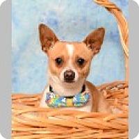 Adopt A Pet :: Chico - Pittsboro, NC