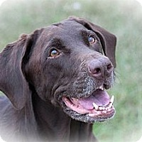 Adopt A Pet :: Bailey - Murdock, FL