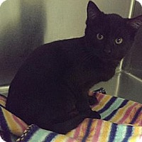 Adopt A Pet :: Paul McCartney - Richboro, PA