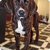 Adopt A Pet :: Fred - Huntsville, TN