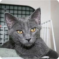 Adopt A Pet :: Amadeus - Frederick, MD