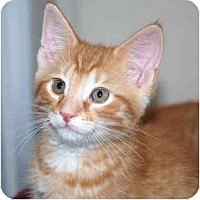 Adopt A Pet :: Sawyer - Markham, ON
