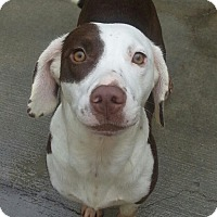 Adopt A Pet :: Angel*ADOPTED* - Chicago, IL