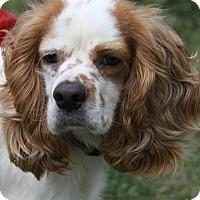 Adopt A Pet :: Hunter 2yr Adopted - Mentor, OH