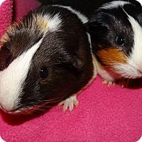 Adopt A Pet :: Bean & Squeak - Fullerton, CA