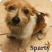Adopt A Pet :: Sparty - San Antonio, TX