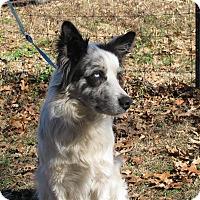 Adopt A Pet :: Scooter - Hartford, CT