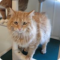 Adopt A Pet :: Bubble Gum - Geneseo, IL