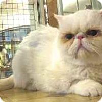 Adopt A Pet :: Snowdrop - Davis, CA