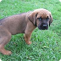 Adopt A Pet :: Tag - Aurora, IL