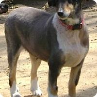 Adopt A Pet :: Sable - Richmond, VA