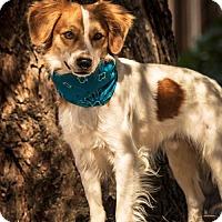Adopt A Pet :: AZ/Sonny - Glendale, AZ