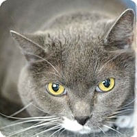 Adopt A Pet :: Fabian - Arlington/Ft Worth, TX