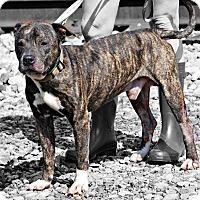 Adopt A Pet :: Jeezy - East McKeesport, PA