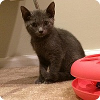 Adopt A Pet :: Oscar - Potomac, MD
