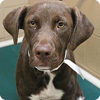 Adopt A Pet :: Jackette - Hilton Head, SC