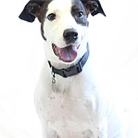 Pointer Mix Dog for adoption in Bradenton, Florida - Ella