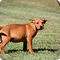 Adopt A Pet :: Atticus - Groton, MA