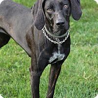 Adopt A Pet :: Bella - Manitowoc, WI