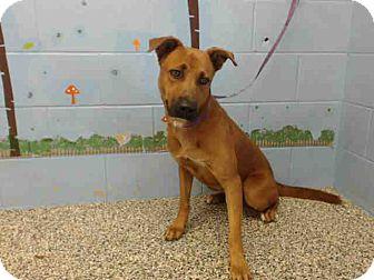 German Shepherd Dog Mix Dog for adoption in San Bernardino, California - URGENT on 10/8 SAN BERNARDINO