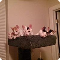 Adopt A Pet :: Jazmine - Darby, PA