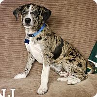 Adopt A Pet :: Tuffy - Green Bay, WI