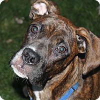 Adopt A Pet :: Sam - Aurora, IL