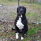 Adopt A Pet :: DUKE