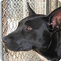 Shepherd (Unknown Type) Mix Dog for adoption in Ruidoso, New Mexico - Jenny