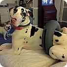 Adopt A Pet :: Calliope