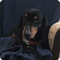 Adopt A Pet :: Burke - Dayton, OH