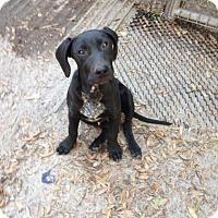 Adopt A Pet :: Slinky - Groveland, FL