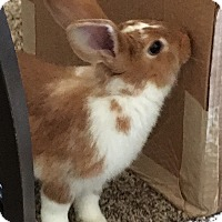 Adopt A Pet :: 14 young rabbits - Hammond, IN