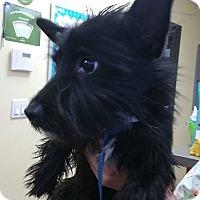 Adopt A Pet :: Molly - Renton, WA