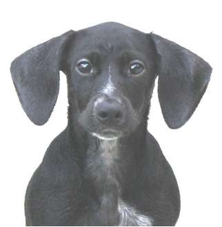 Small Dogs Bainbridge Ga Adoption