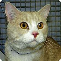 Adopt A Pet :: Stretch - Green Bay, WI
