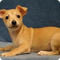 Adopt A Pet :: Sweet Pea - Sacramento, CA
