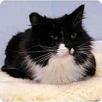 Adopt A Pet :: Ali - Modesto, CA