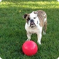 Adopt A Pet :: Hank - Chicago, IL