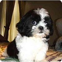 Adopt A Pet :: Gia - Mooy, AL